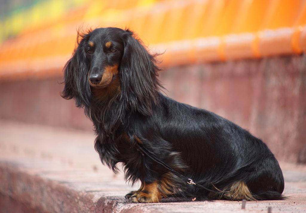 Пополнение в собачьем семействе: о беременности и родах