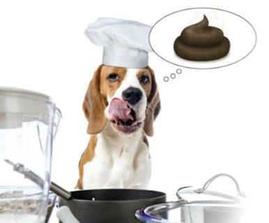 Почему собака ест свой кал?