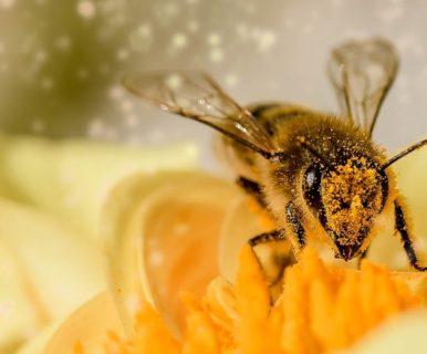 Почему пчёлы кусают?