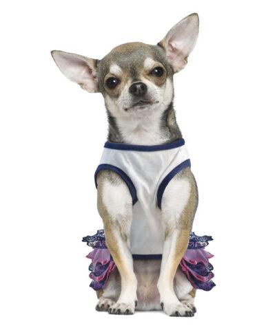 Как выбрать платье для собаки