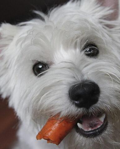Почему у собаки плохо пахнет изо рта