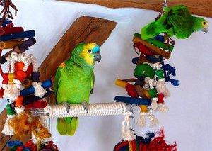 Советы специалистов из чего не следует делать игрушки попугаям