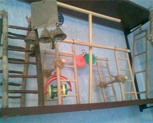 Подробное описание как из детских игрушек сделать развлечение для попугая