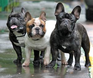 сильная аллергия у собаки