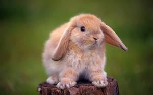 Фото кролик