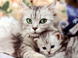 Воспитание котенка в 2 месяца