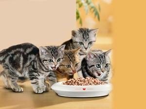 Сколько нужно кормить кот в день