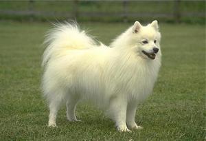 фото собак белых