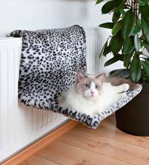 Перечень противопоказания для прогулки кошек с использованием шлеек