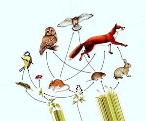 Разновидности цепей питания в лесу