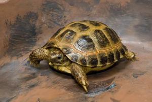 как ухаживать за черепахой?
