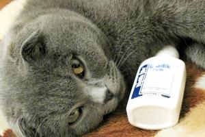 У кота температура и насморк