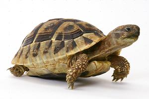 Как ухаживать за панцирем черепахи