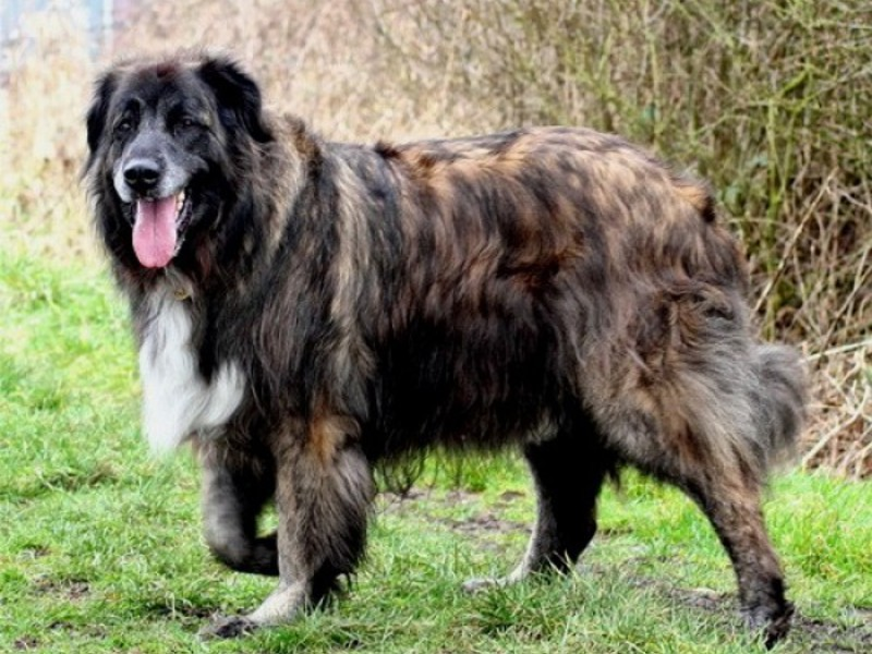 аллергия у щенка немецкой овчарки