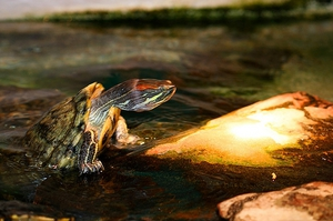 Непригодные аквариумы для черепах