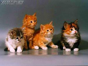 препараты при лямблиозе у кошек