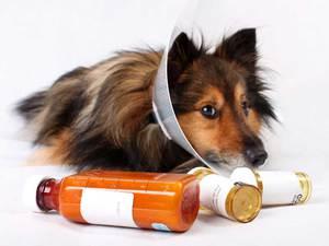Таблетки для снятия болевых симптомов у собак