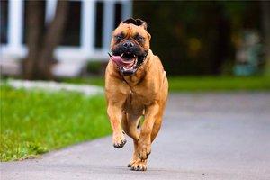 Dogtime  The place for dog breeds pet adoption pet