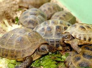 Все ли едят черепахи