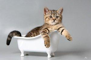 Нужно ли купать кошек? - Мурлыка