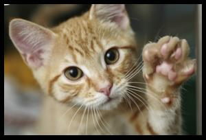 Почему коты топчут подушку