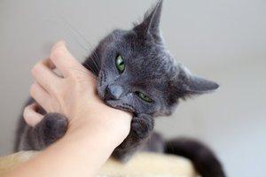 как успокоить кота