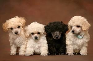 Собачьи имена