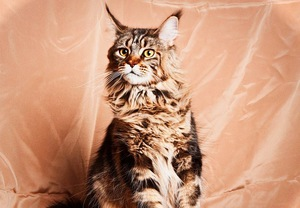 До какого возраста котята коты