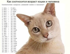 Как узнать человеческий возраст кота по человеческим меркам