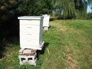 Ульи для пчел из пенополистирола своими руками фото 307