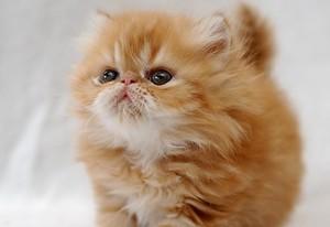 Красивое и необычное имя для кота