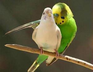 Удобное гнездо для волнистых попугаев