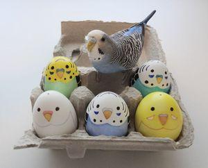 Материалы для изготовления домика для волнистых попугаев