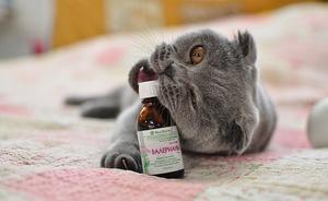 Дозы валерьянки для кота