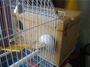Размеры гнезда для волнистых попугаев