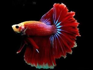 рыбки скачать через торрент - фото 10
