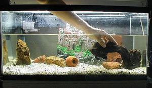Необчный дизайн аквариума своими руками