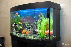 Примеры дизайна аквариума