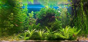 В любом аквариуме живут бактерии и должны обитать водоросли.