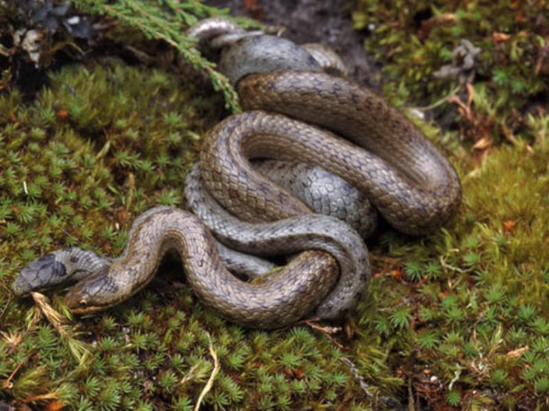 Какие змеи не откладывают яйца, а рождают живых змеят