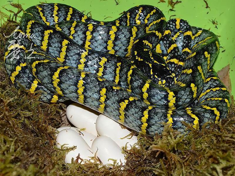 Особенности поведения змей