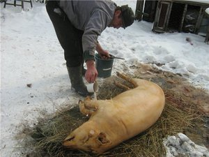 вырезать жир на животе