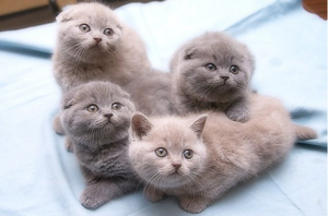 Клички для кошек девочек серого цвета