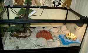 Террариум для сухопутной черепахи