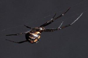 Фото тарантула русского  animalsfotocom