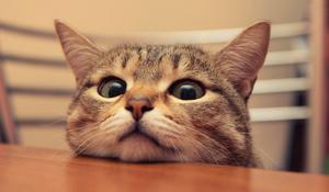 Почему чихает кот что делать